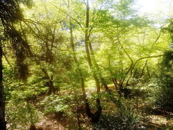 Οργιαστική η βλάστηση στην κοίτη του ποταμού.