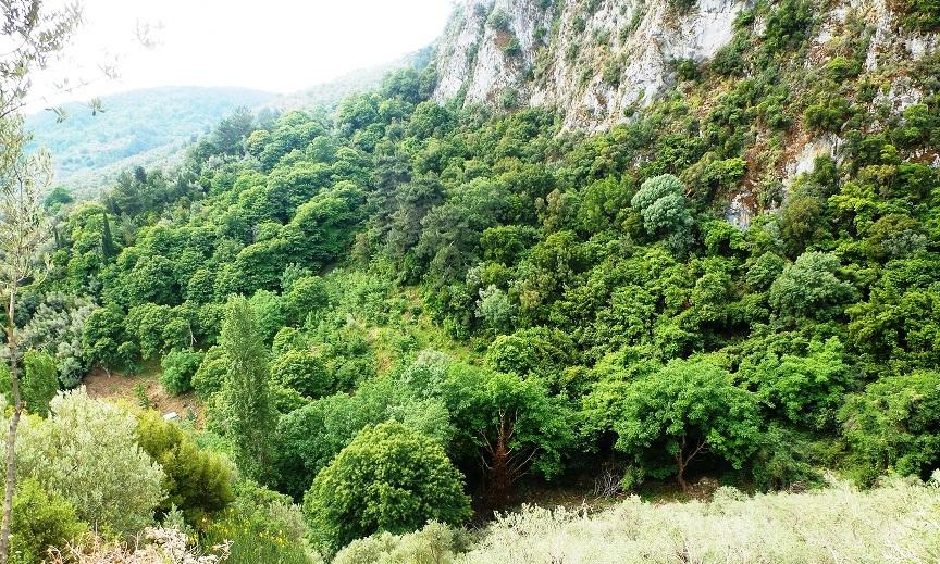 Το καστανοδάσος απλώνεται στα ριζά του Καρυώνα.