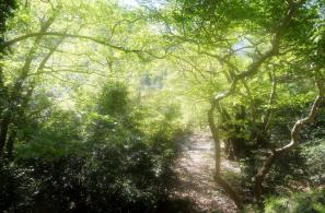 Οργιαστική η παρόχθια βλάστηση στο ρέμα της Καρκαβούρας.